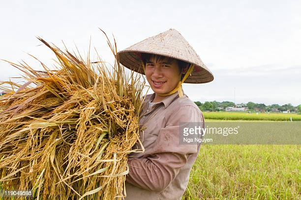 Teenage boy holding rice stalks