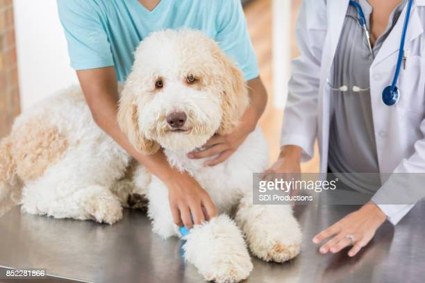 Teenage boy takes his injured dog to see the veterinarian