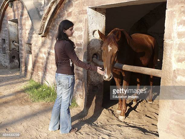 Teenage Girl Petting Marwari Pony Indigenous To Rajasthan India