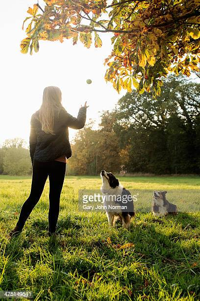 Teenage girl playing ball with dogs, Norfolk, UK