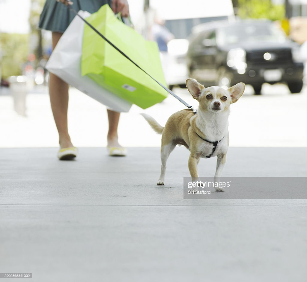 Teenage girl (17-19) walking dog