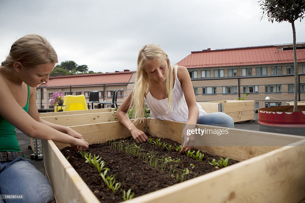 Teenage girls working in plant box