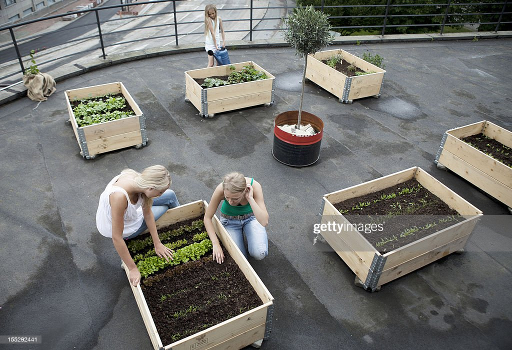 Teenage girls working in plant boxes