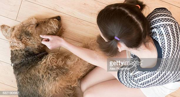 Teenager girl petting the airedale terrier dog