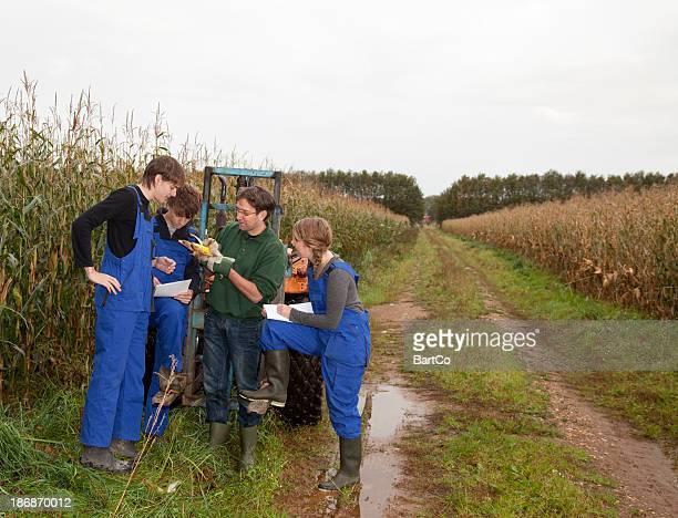 Adolescentes aprender el oficio. Aprendiz mirando en el maíz.