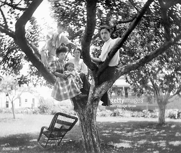 Teenagers with a young child gather in a tree in the backyard
