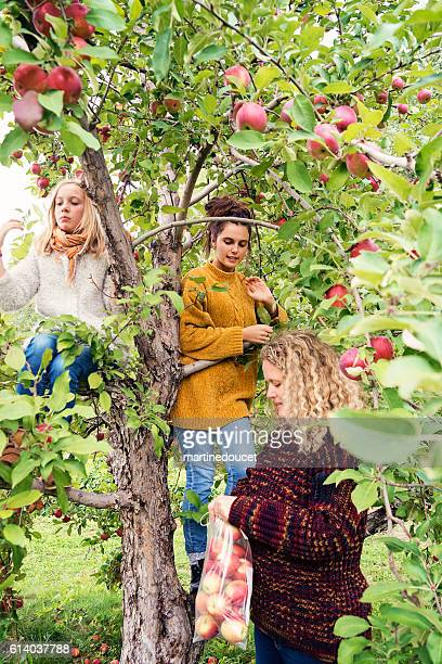 Teenagers with mother picking apples in orchard, autumn.