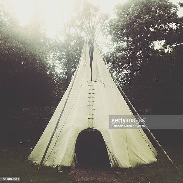 Teepee In Forest
