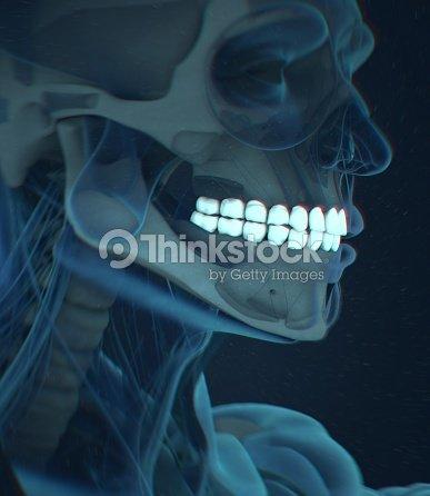 Dientes Rayos Anatomía Dental Ilustración 3d Foto de stock | Thinkstock