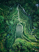 Drone shot of the famous Tegallalang rice terrace in Bali, Indonesia