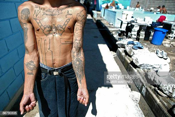 An unidentified member of the Mara Salvatrucha 'MS13' shows his tatoos in the unit where he is kept imprisioned in the National Penitentiary in...