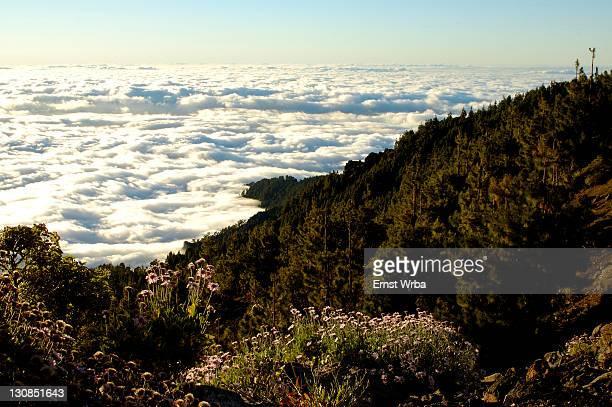 Teide national park, view onto a sea of clouds, Tenerife, Canary Islands, Spain
