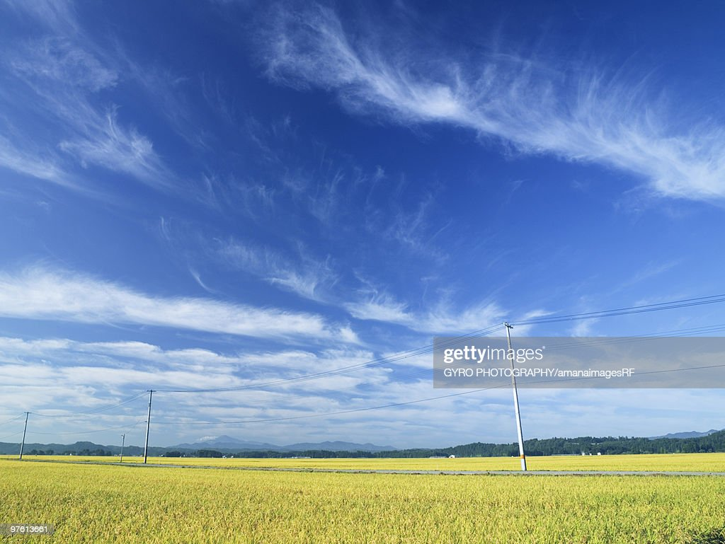 Telegraph pole over wheat field, Daisen, Akita Prefecture, Japan