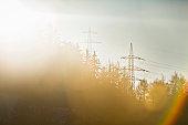 Telephone poles over trees