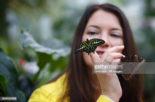 Television horticulturalist Rachel de Thame poses with butterflies in the glasshouse at RHS Wisley near Woking Surrey The butterflies will be at the...
