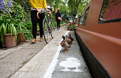 Temporary duck lanes have been painted on busy towpaths in London Birmingham and Manchester to highlight the narrowness of the space that is shared...