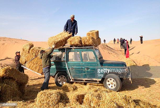 Ten thousands of workers are volunteerly doing the desertification control on 6th November 2014 in Wuwei Gansu China