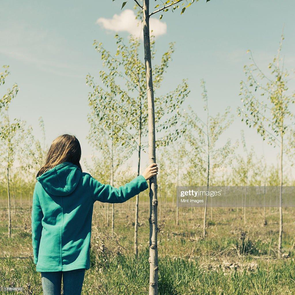 Ten year old girl standing next to commercially grown poplar tree on large tree farm, near Pendleton, Oregon.