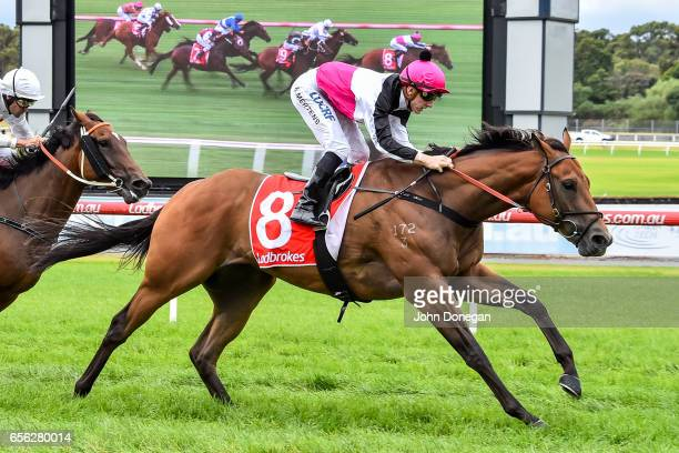 Tenappy Ladies ridden by Beau Mertens wins the Comcater Plate at Ladbrokes Park Hillside Racecourse on March 22 2017 in Springvale Australia