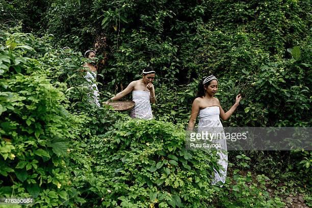 Tengananese adolescents fetch holy water from the springs before the pandanus war ritual begins on June 8 2015 in Tenganan Pagringsingan Village...