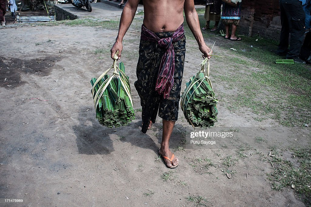 A Tengananese man carries thorny pandanus leaves during a pandanus war ritual on June 25, 2013 in Tenganan, Karangasem, Bali, Indonesia. Every year Tengananese people in the island of Bali celebrate a month-full ceremony called 'Usabha Sambah', to demonstrate respect to the God Indra, the Hindu god of war. One of the rituals during the ceremony is a Pandanus War or 'Mekare Kare', where two Tengananese men duel using thorny pandanus as their weapon.