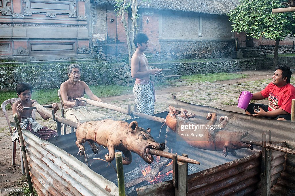Tengananese people cook roasted pigs before the Pandanus War ritual on June 25, 2013 in Tenganan, Karangasem, Bali, Indonesia. Every year Tengananese people in the island of Bali celebrate a month-long ceremony called 'Usabha Sambah', to demonstrate respect to the God Indra, the Hindu god of war. One of the rituals during the ceremony is a Pandanus War or 'Mekare Kare', where two Tengananese men duel using thorny pandanus as their weapon.