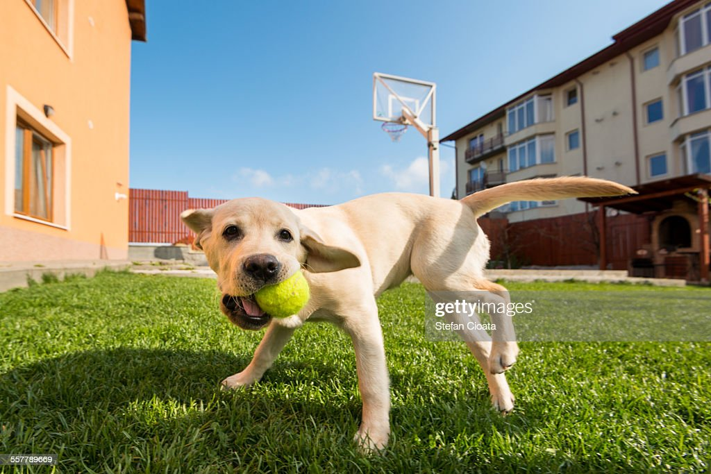 tennis time tennis time stock photo getty images