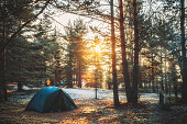 Tent in a pine forest on sunset. Rest in the tent. Camping in the forest near the lake. Unity with nature
