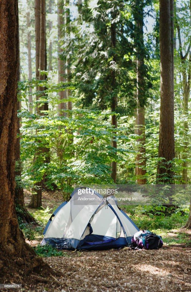 Tent in woods : Stock Photo