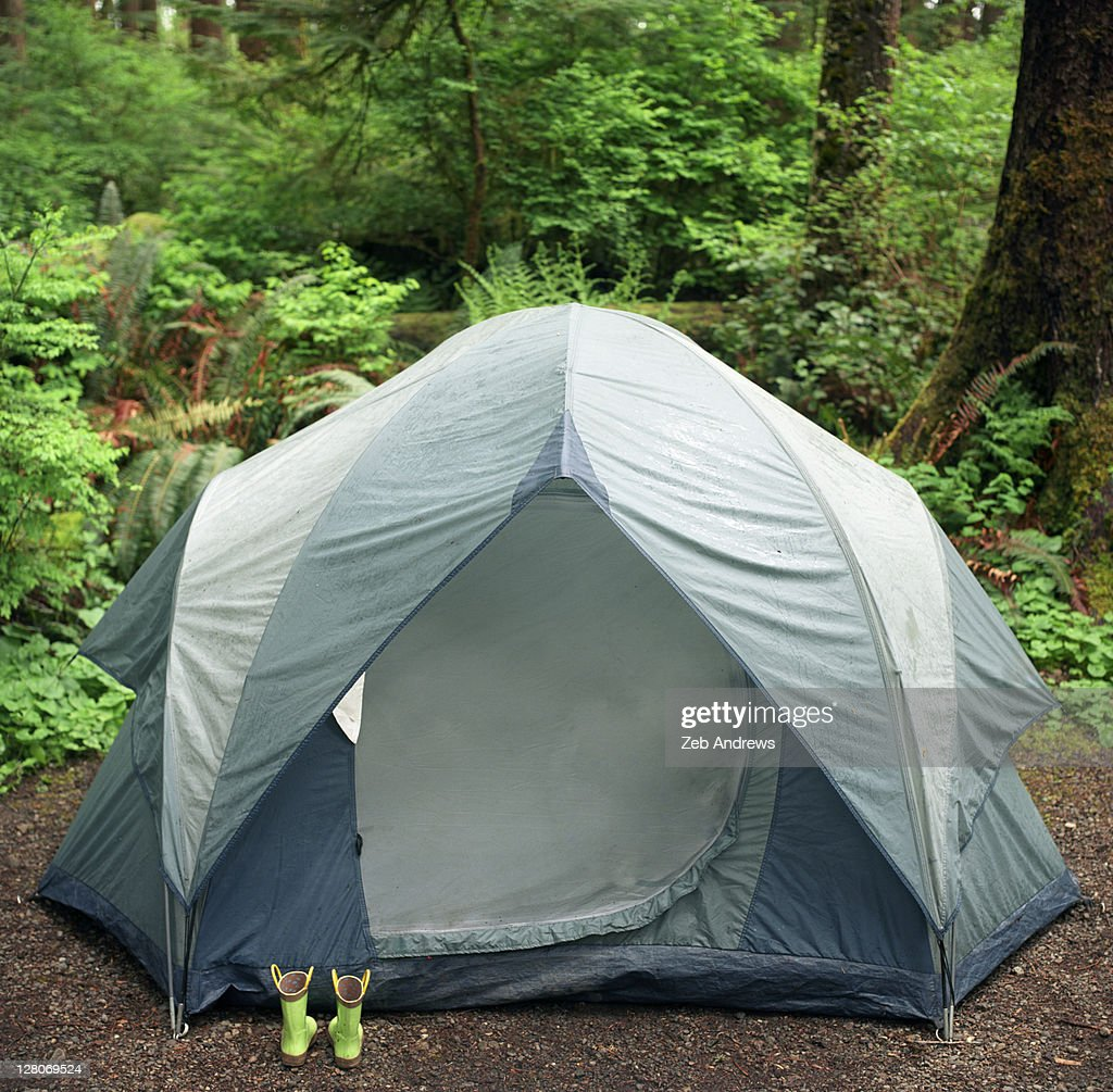 Tent set up in Olympic rain forest