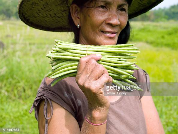 Teodora Ayson holds freshly picked green beans from her garden in Pamantingan Esperanza Sultan Kudarat province The Philippines Teodora and her...