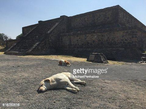 Teotihuacan, sleeping dogs : Stock Photo