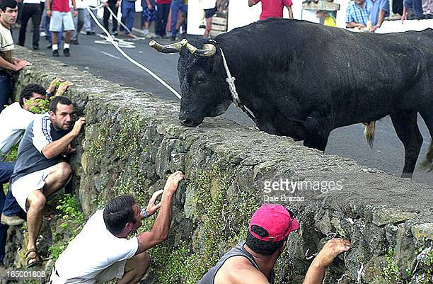 Terceira AzoresCome out to play you chickenshits The pride of the Portuguese empire hide from the ire of a angry bull during the Bullona Rope...