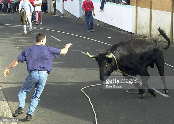 TerceiraOleOle A Toronto native of the Azores dos his best to avoid a charging bull BullonaRope bullfighting is unique to this island the third...