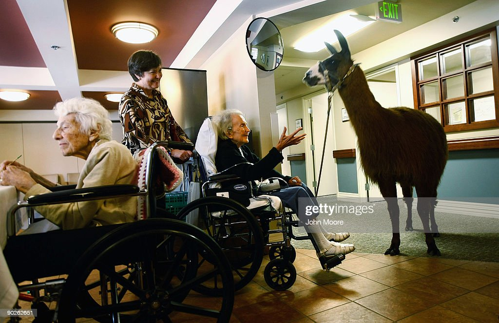Terminally ill hospice resident Magdalene Ginsburg (R) reaches out to Pisco, a 13-year-old therapy llama, at the Hospice of Saint John on Sept.1, 2009 in Lakewood, Colorado. The llama visits the hospice each month as part of an animal therapy program designed to increase happiness, decrease loniliness and calm terminally ill patients during the last stage of life. The non-profit hospice, which serves on average 200 people at a time, is the second oldest hospice in the United States. The hospice accepts patients regardless of their ability to pay, although most are covered by Medicare or Medicaid. End of life care has become a contentious issue in the current national debate on health care reform.