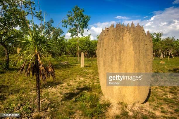 Termite mound in Litchfield National Park