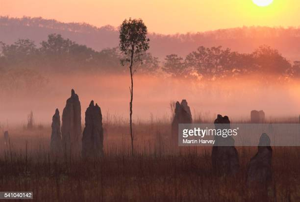 Termite Mounds at Sunrise