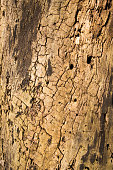 Termite infested log