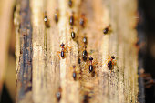 Termites running on the wood selective focus