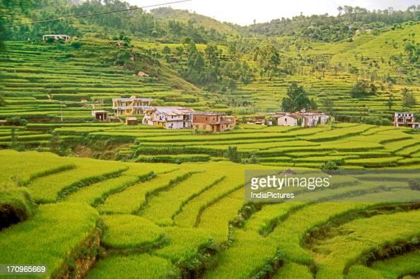 Terrace farming Kumaon Uttaranchal India