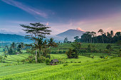 Spectacular morning view of terrace paddy fields in Bali, Indonesia, with the volcano Agung in the backdrop.