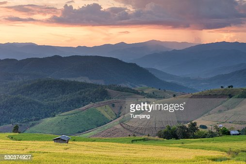 Terrace rice field over mountain range at sunset