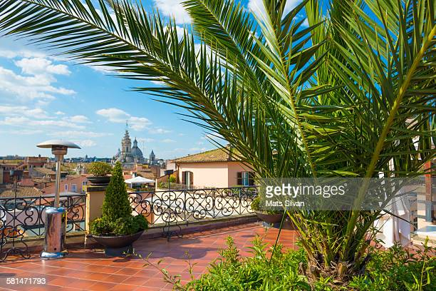 Terrace with palm tree