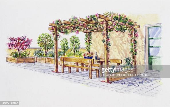 Botanical illustration stock photos and pictures getty for Terrace pergola