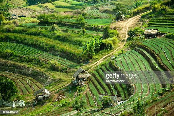 L'agricoltura terrazza