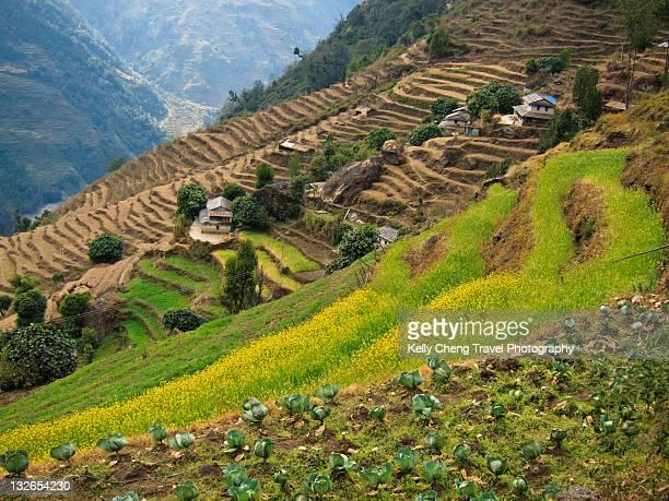 Terraced farms