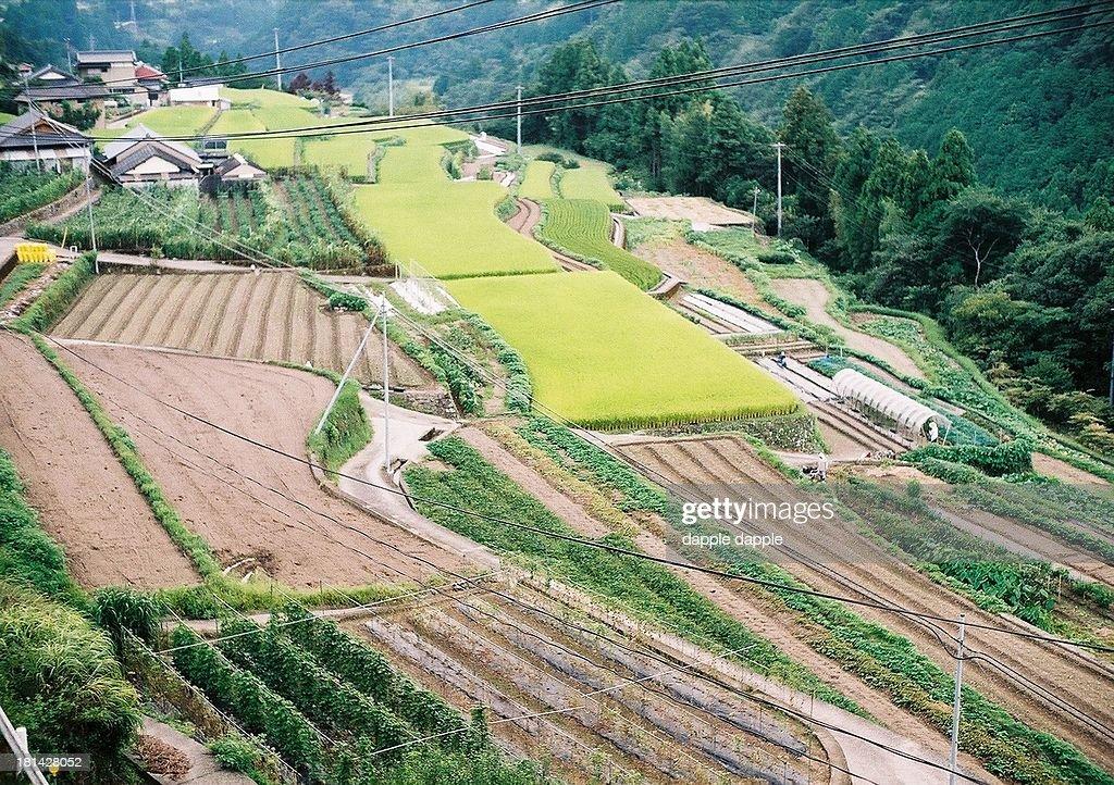 terraced fields