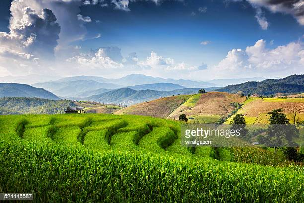 Terraced Paddy Field