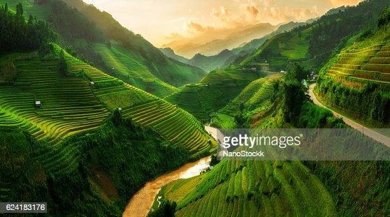 Terraced rice field in Mu Cang Chai, Vietnam : Stock Photo