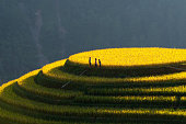 Terraced rice field in North Viet Nam